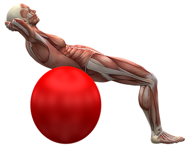 exercise-ball-2277451_1280.png