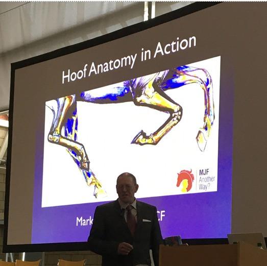 horse hoof anatomy in action