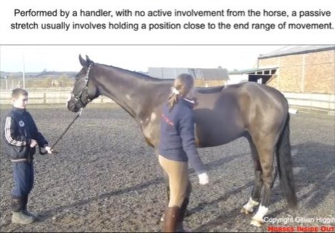 Passive stretch - performed by a handler, with no active involvement from the horse, a passive stretch usually involves holding a position close to the end range of movement. active