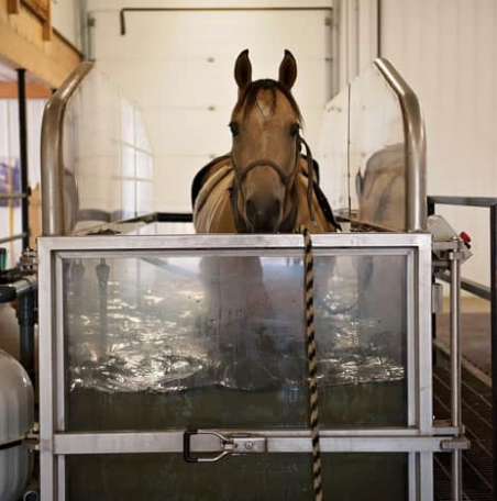 The effect of weekly water treadmill training on changes in the limb kinematics in a group of 38 horses during water treadmill exercise