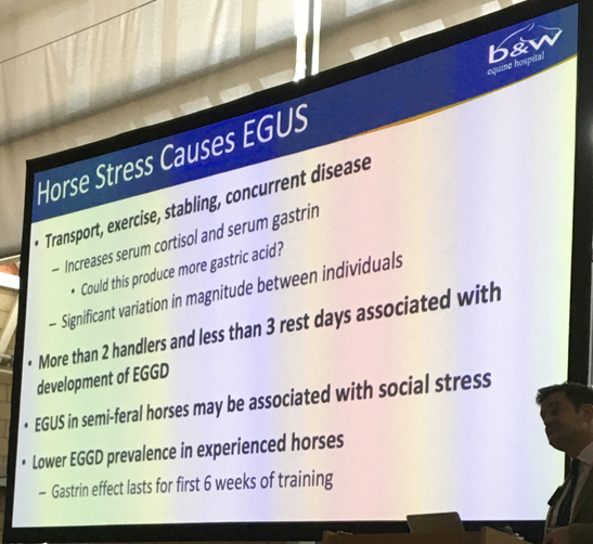 Horse stress causes Equine Gastric Ulcer Syndrome