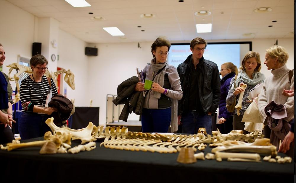 anatomy exhibition build a horse skeleton