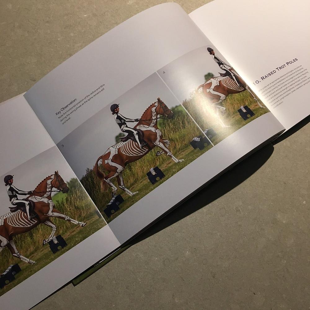 raised trot poles, biomechanics, anatomy, skeleton, horse and rider