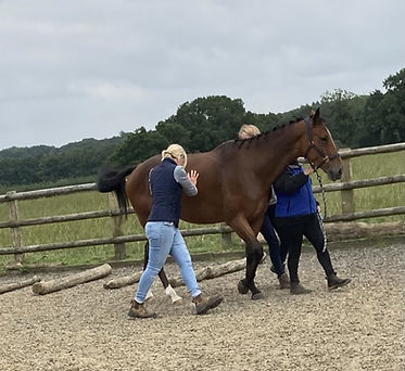 Jessica_Limpkin_equine_massage_therapy_horses_inside_out_gillian_higgins_cpd_Myofascial_te