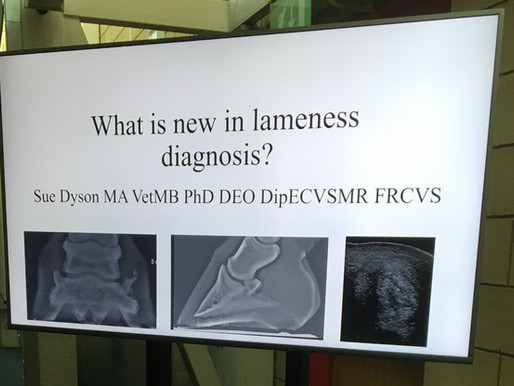 What's is new in lameness diagnosis CONFERENCE 2020 - PART 10