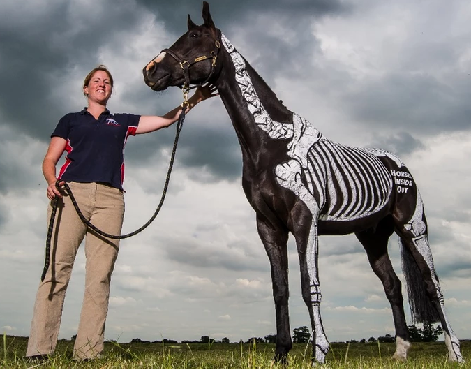 Gillian Higgins, horses inside out, skeleton, anatomy, pelvis, massage, equine therapy, equine therapist