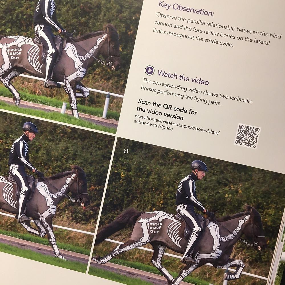 biomechanics of tolt, horse gaits, horse movement, icelandic horse