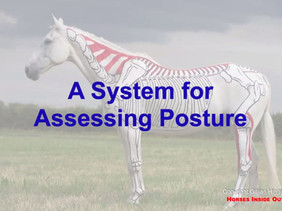 UNDERSTANDING AND ASSESSING EQUINE POSTURE - WITH GILLIAN HIGGINS, HORSES INSIDE OUT