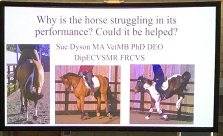 equine orthopaedics, with a particular interest in poor performance and subtle and complex lameness in sport horses.