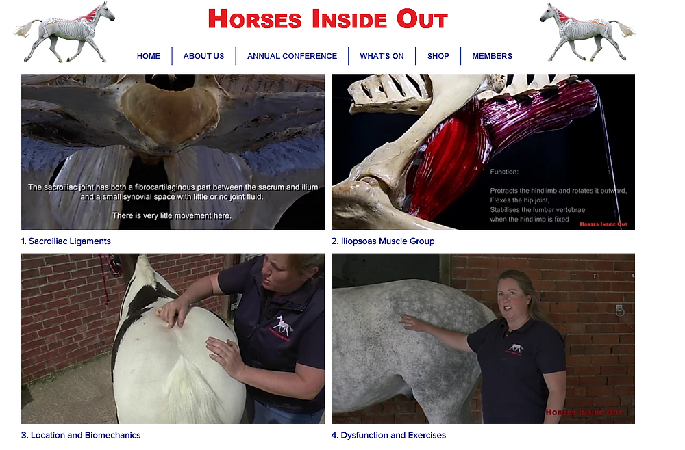 video lectures, horse sacroiliac ligaments, equine iliopsoas muscles, location and biomechanics, dysfunction and exercises