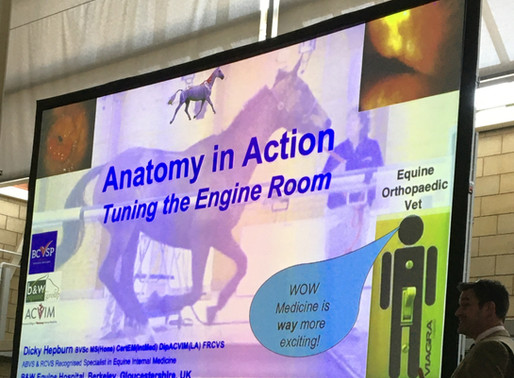 HORSES INSIDE OUT CONFERENCE 2020 - ANATOMY IN ACTION - PART 11A