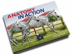 ANATOMY IN ACTION - BOOK AND ONLINE VIDEO COURSE - FIND OUT MORE........