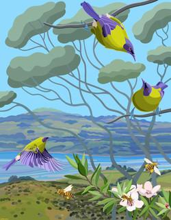 Bell Birds, Bees and Manuka