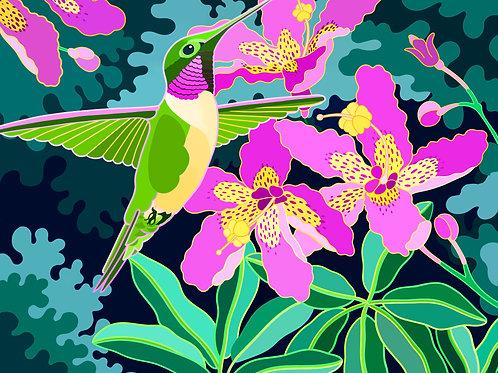 Hummingbird & Orchid