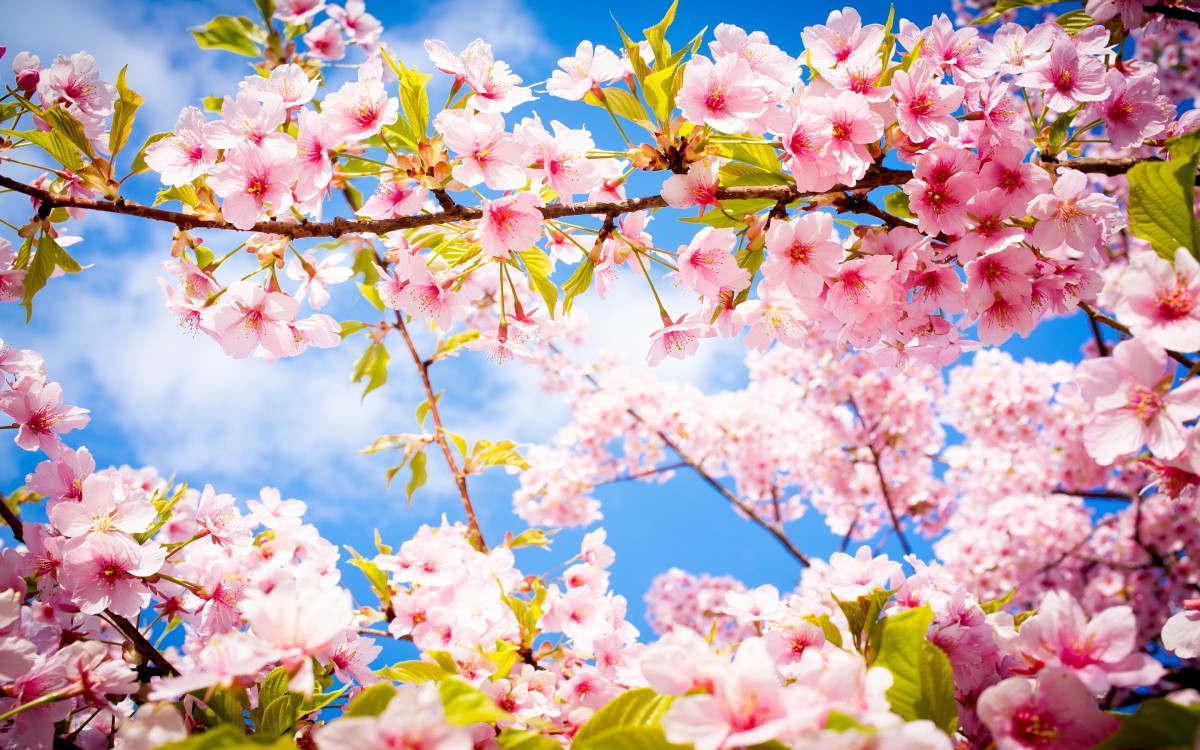 Spring3.jpg