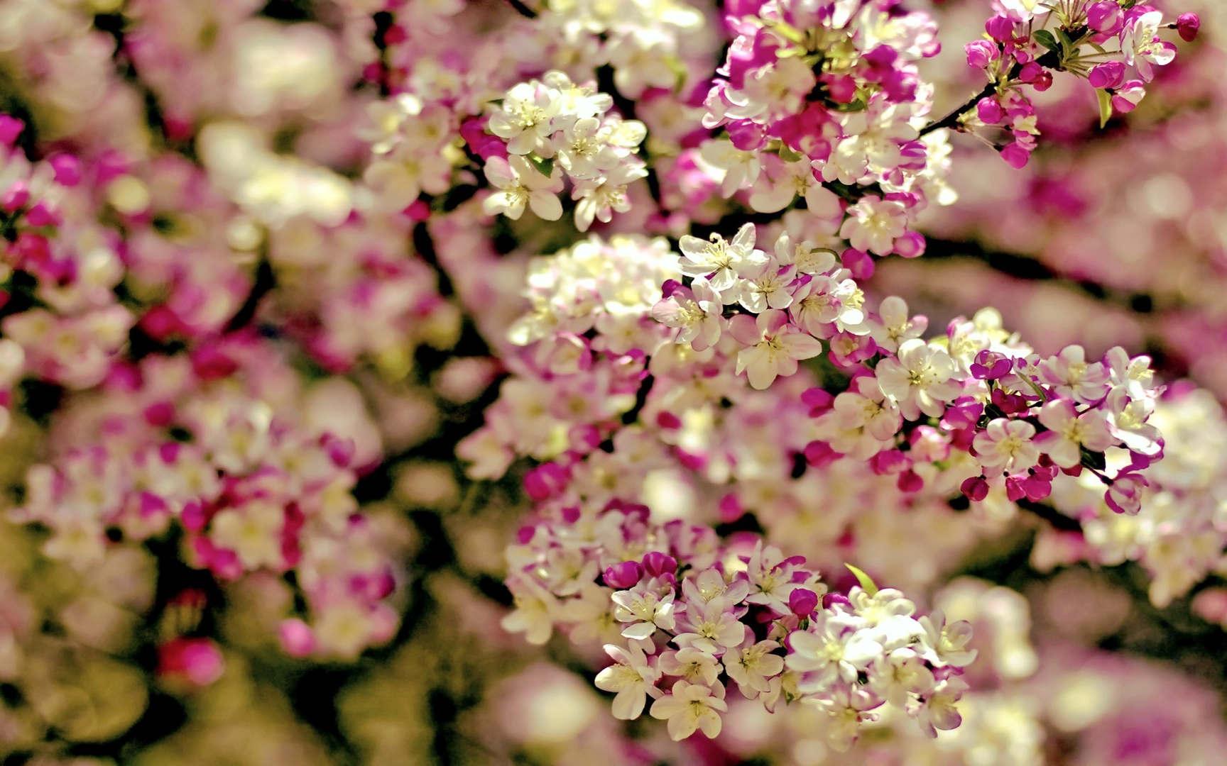 Spring16.jpg