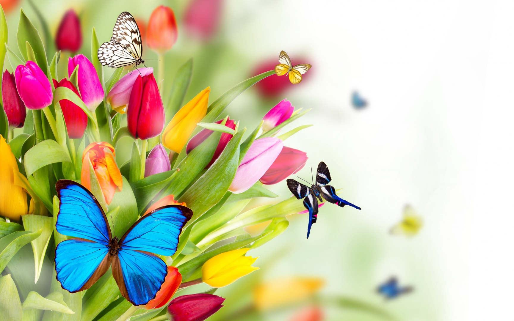 Spring8.jpg