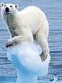 polar-bear1-460x250.jpg