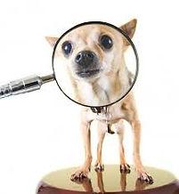 dog magnifying glass.jpg