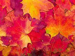 fall 7.jpg