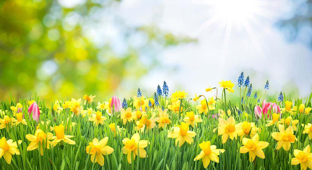 Spring10.jpg