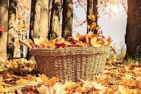 fall 8.jpg