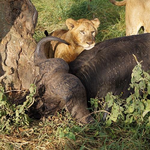2016 Kenya Trip