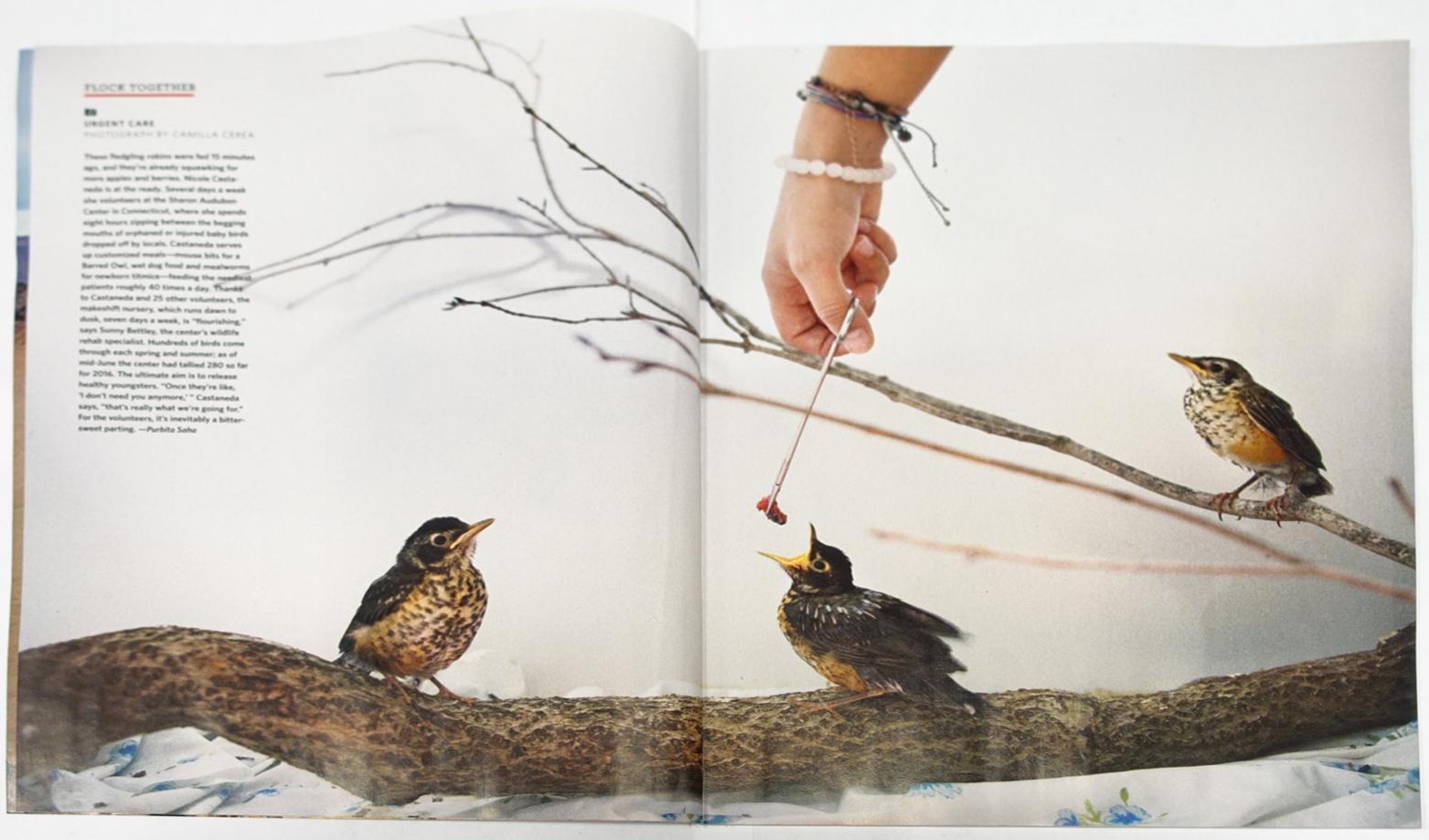 Audubon - Magazine