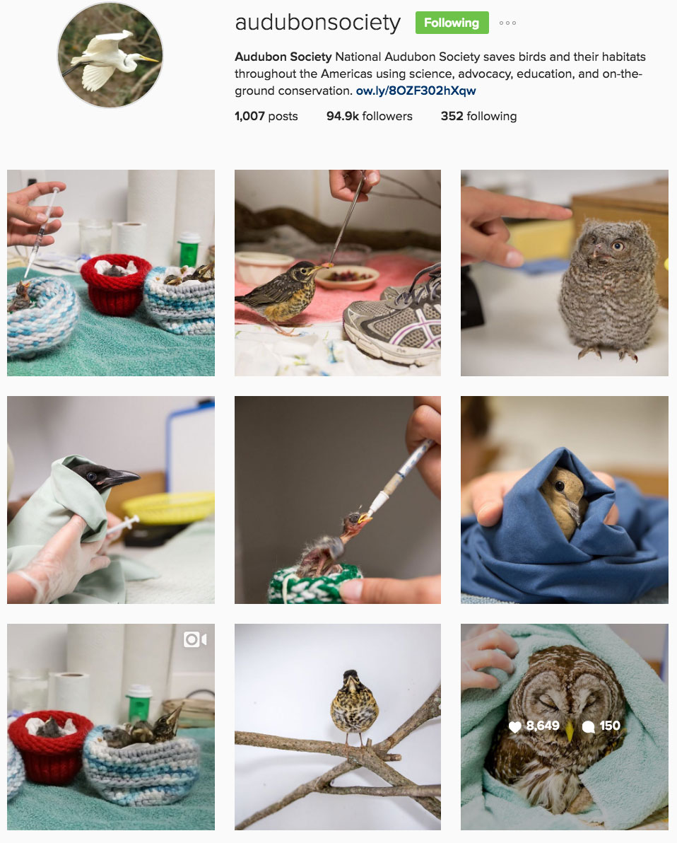 Audubon - Instagram Takeover