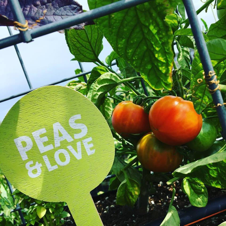 Peas and Love Project - Veggies and growing!