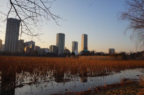 Sun Set on the city