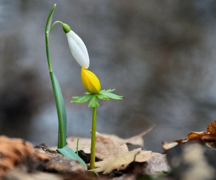 """У каждой травинки свой Ангел, который наклоняется к ней и шепчет: """"Расти, расти..."""" Талмуд"""