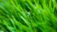 Grass blade CU.jpg