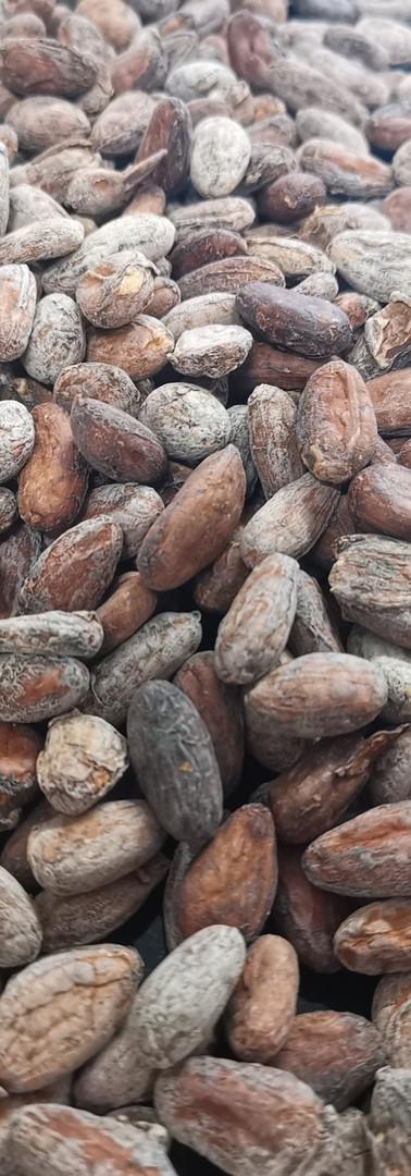 geröstete Kakaobohnen aus West Bali