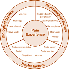 Image of the ecosystem of what constitutes pain experience (biological factors, social factors, and psychological factors)