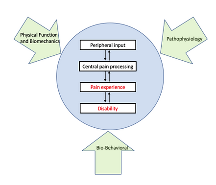 REACH diagram.png