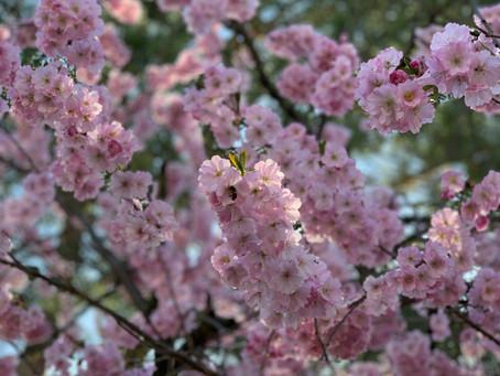 Frühlingszeit - Entgiftungszeit