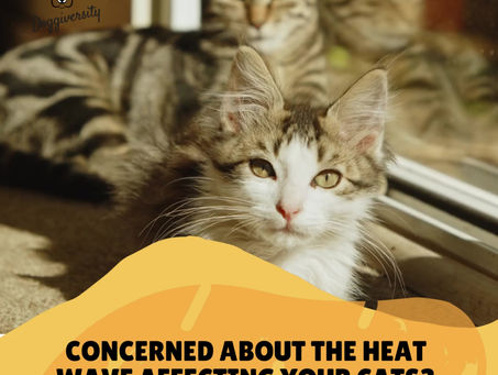 Summer tips for cats