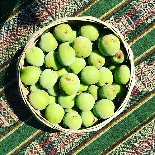 梅と薬草のミックス酵素500ミリ