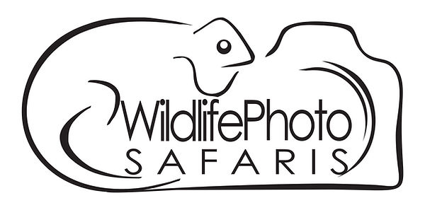 Photo Safaris in South Africa