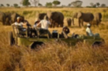 botswana-safari.jpg