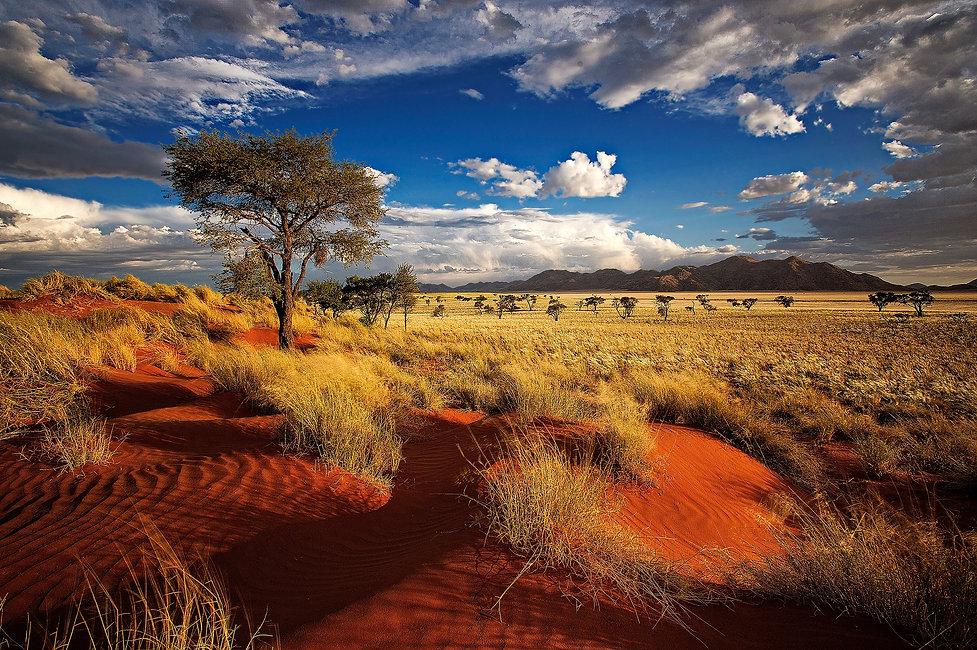 jachtreizen naar Afrika - Big5 - Zuid-Afrika, Namibië, Botswana, Zimbabwe Plains game