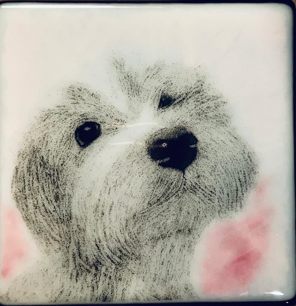 Puppy (sold)
