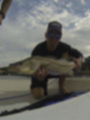 snook on pocket change inshore fising charters,