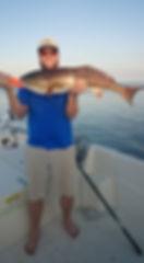 copper redfish,