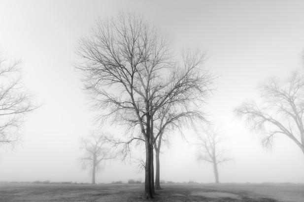 Memphis Fog-01.jpg