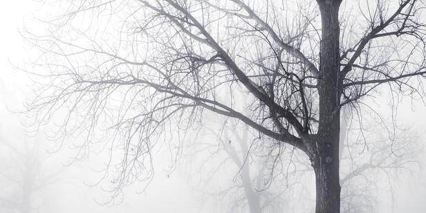 Memphis Fog-03.jpg
