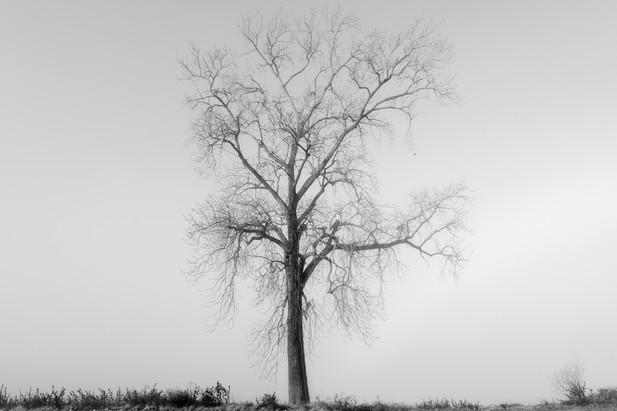 Memphis Fog-02.jpg