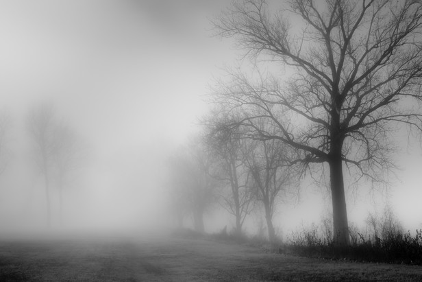 Memphis Fog-10.jpg