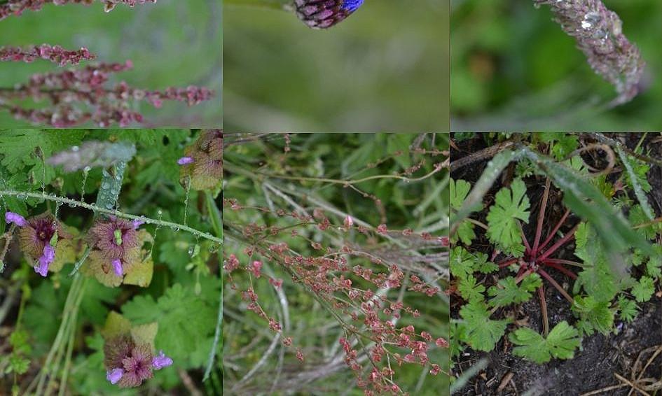 Indigenous plants / Plantas autóctonas